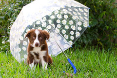 Valp under paraplyet arkivfoto