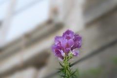 `-Valpar och fönster`, Royaltyfria Foton