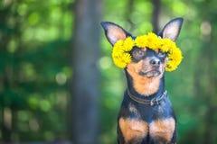 Valpen för Ð-¡ ute, en hund i en krans av våren blommar på naturliga lodisar fotografering för bildbyråer