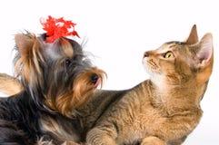 Valpen och kattungen royaltyfri bild