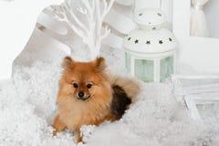Valpen som ligger på snön nära lampan Royaltyfri Foto