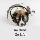 Valphund med hörlurar som lyssnar till musik Arkivfoto