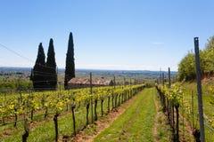 Valpolicella小山环境美化,意大利葡萄栽培区域,意大利 免版税图库摄影