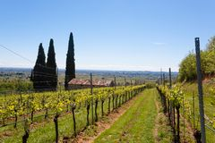 Valpolicella hills landscape, Italian viticulture area, Italy. Rural landscape gargagnago santambrogio di valley agriculture blue country countryside farming royalty free stock photography