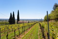 Valpolicella hills landscape, Italian viticulture area, Italy. Rural landscape, gargagnago, santambrogio, di, valley, agriculture, blue, country, countryside royalty free stock photography