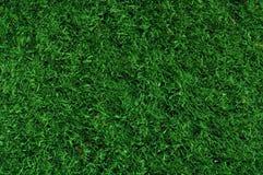 Vals Gras dat op sportterreinen wordt gebruikt Royalty-vrije Stock Afbeeldingen