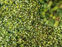 Valse bladeren Stock Afbeelding