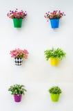 Valse bloem stock afbeeldingen