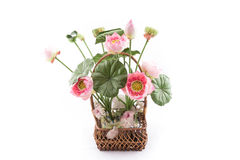 Valse bloem met roze lotusbloem op witte backg Royalty-vrije Stock Fotografie
