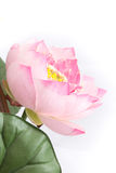 Valse bloem met roze lotusbloem op witte backg Stock Foto's