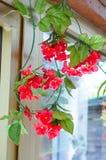 Valse bloemen Stock Afbeelding