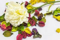 Valse bloemen op achtergrond royalty-vrije stock fotografie