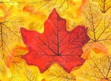 Valse dalingsbladeren met een rood blad in het centrum Stock Foto