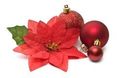 Valse poinsettia met Kerstmis stock foto