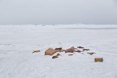 Valstycken på det arktiska havet, kärra Alaska Royaltyfri Foto