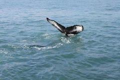 Valsvansen Arkivfoto