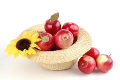 valt nytt för äpplen royaltyfria foton