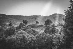 Valt träd Arkivfoto