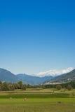 Valtellina, Italien Stockbild