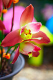 Valuable orchid Stock Photo