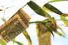Valuta av F?renta staterna med naturbakgrund royaltyfri fotografi