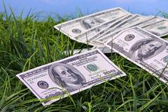 Valuta degli Stati Uniti in erba Fotografia Stock