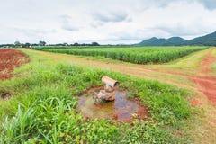 Valve de l'eau Image stock