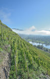 Valwiger Berg,Mosel Valley,Germany Royalty Free Stock Photos