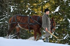 Lumberjacks with horse in the forest. Vama, Romania, January 27, 2018: Romanian lumberjacks with horse preparing to cut a tree stock images