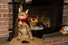 Vampire Cat. A cute cat wearing a Vampire costume Stock Photography