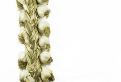 Garlic braids Royalty Free Stock Image