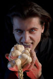 Vampire with scary eyes is licking garlic. Red horror light, isolated on black background Stock Image