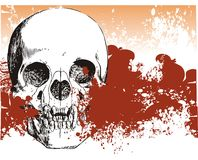 Vampire skull demon illustration Royalty Free Stock Images