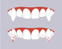 Vampire teeth with bloody fangs. Vector illustration. Royalty Free Stock Images