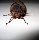 Van aangezicht tot aangezicht met een insect Royalty-vrije Stock Afbeelding