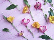 Van achtergrond bloemenalstroemeria houten versheidspatroon Stock Fotografie