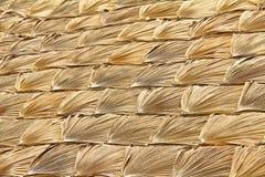 Van achtergrond palmbladen frame Stock Afbeelding