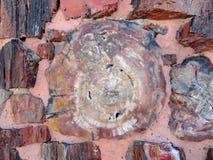 Van angst verstijfd hout, Arizona Stock Afbeelding