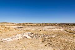 Van angst verstijfd hout, boomlogin de woestijn, klimaatverandering, het globale verwarmen Royalty-vrije Stock Afbeelding