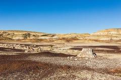 Van angst verstijfd hout, boomstomp in de woestijn, klimaatverandering, het globale verwarmen Royalty-vrije Stock Foto