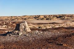 Van angst verstijfd hout, boomstomp in de woestijn, klimaatverandering, het globale verwarmen Stock Foto's