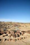 Van angst verstijfde boomboomstam en woestijn in Namibië stock afbeelding