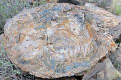 Van angst verstijfde boomstomp in het Nationale Park van Karoo royalty-vrije stock foto
