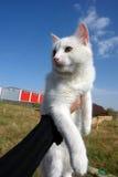 Van cat άγαλμα σε Igdir Στοκ Φωτογραφία