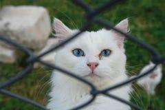 Van cat Στοκ Εικόνες