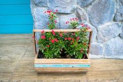 Van Christus de doorn (Wolfsmelkmilii) bloem in de houten mand royalty-vrije stock foto