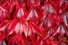 Van de Achtergrond bladeren van de herfst textuur Royalty-vrije Stock Afbeeldingen