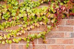 Van de Achtergrond bladeren van de herfst textuur Stock Foto