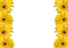 Van de achtergrond bloem frames stock foto
