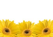 Van de achtergrond bloem frames stock foto's